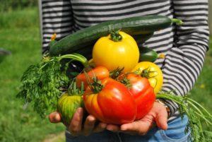 ベランダで家庭菜園をする場合のおすすめ野菜!