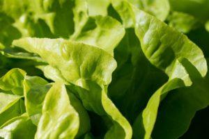 家庭菜園に虫がつく対策法!